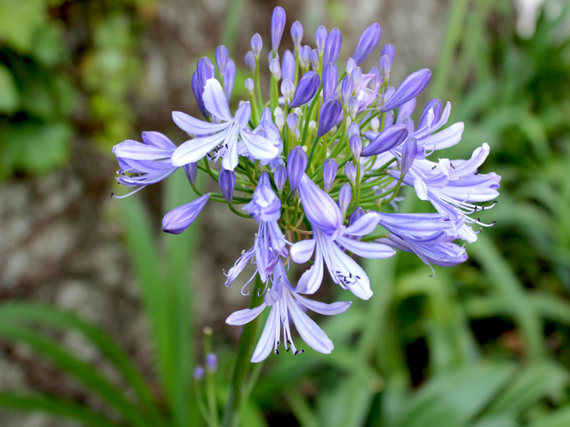 plantas de jardim que gostam de umidade : plantas de jardim que gostam de umidade:Guia rápido do plantio de flores bulbosas: Controle a umidade, cuide