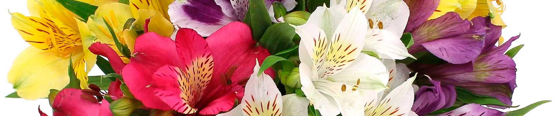 flores de astromelias