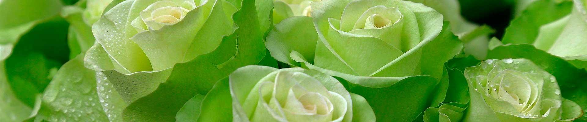 flores de cor verde