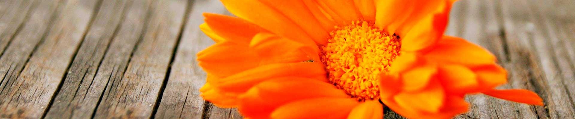 flores até 150 reais