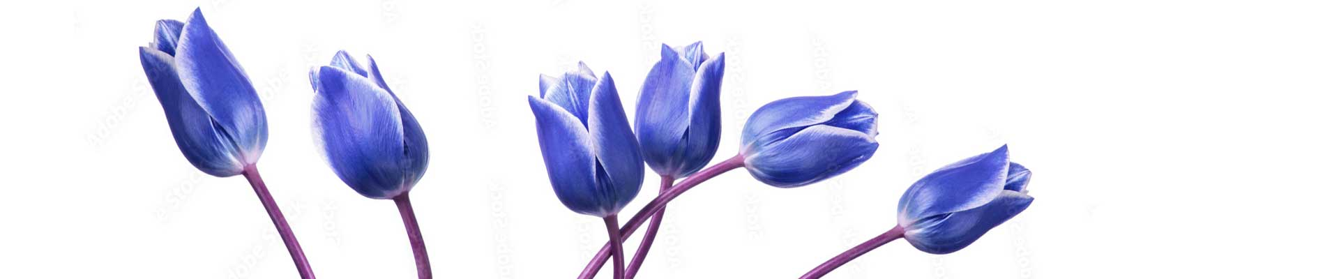 flores de inverno 2021