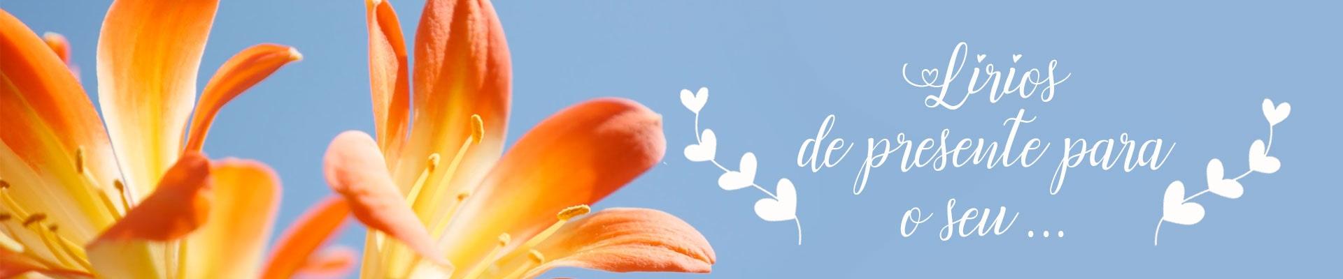 flores de lírio