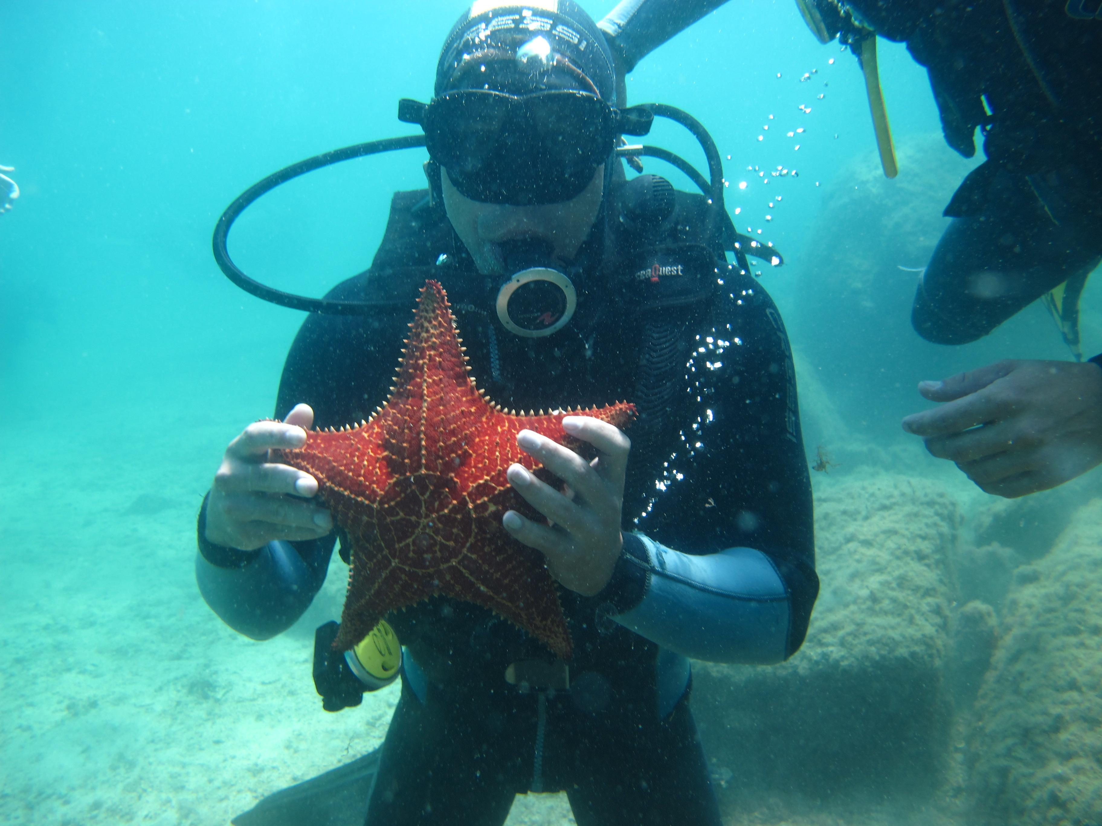 melhulhador segunrando estrela do mar em mergulho em ilha grande