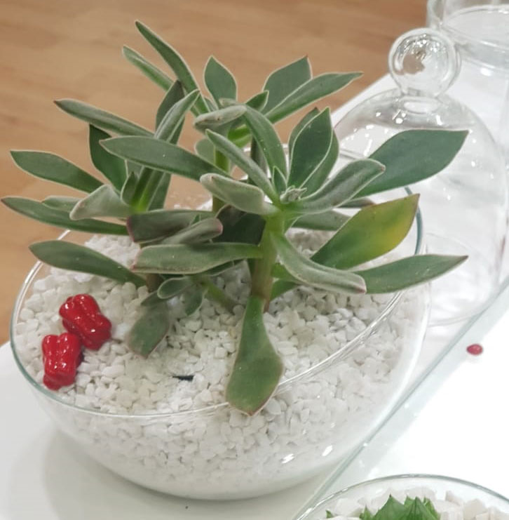 Vaso de Vidro Diagonal