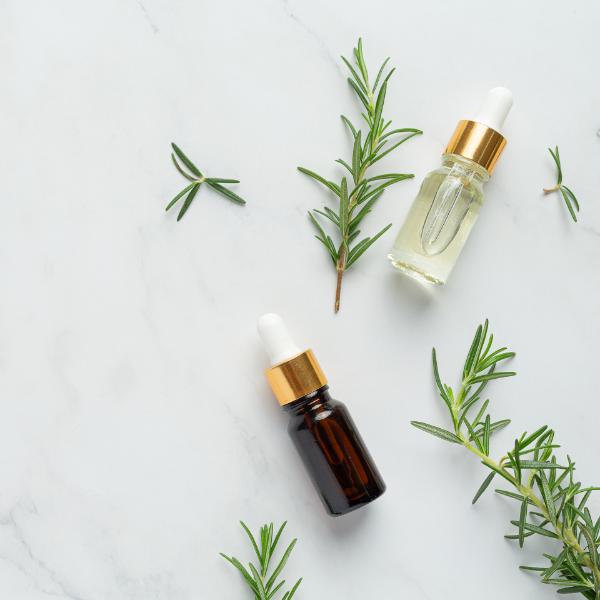 Planta e óleo essencial de alecrim