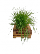 Cachepot Pequeno para plantio de grama para os pets