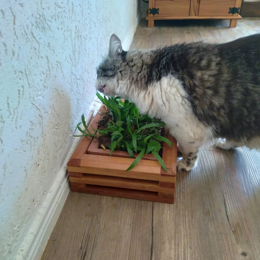 Cachepot Grande para plantio de grama para os pets