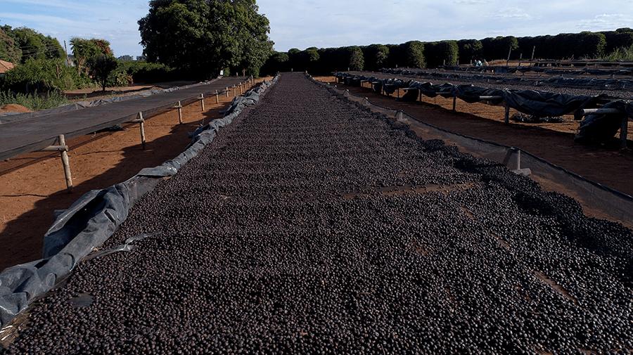 Pacotão Dolce Cerrado - Chocolate e Caramelo
