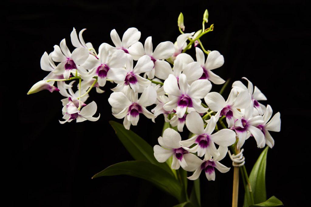 Forth Orquideas Floração 500ml Pronto Uso