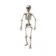 Esqueleto Articulado 160cm