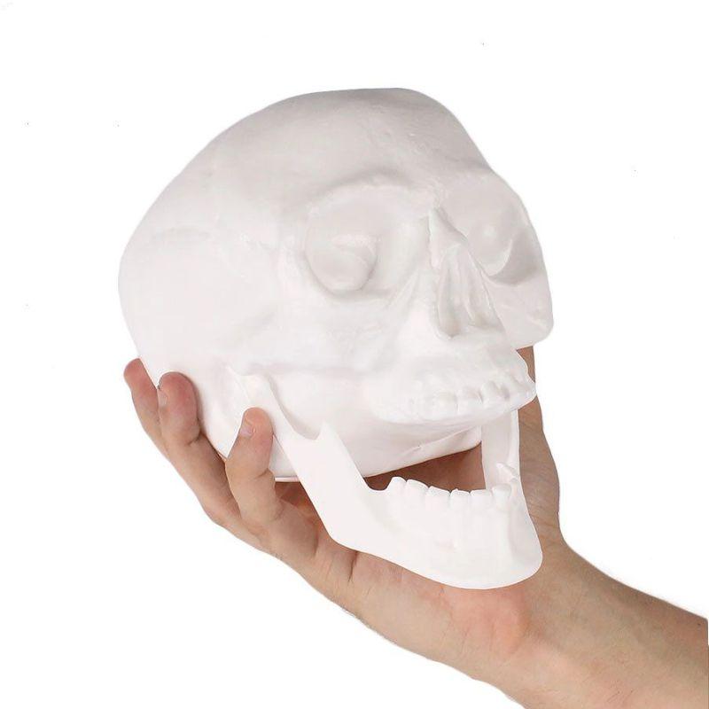 Decoração Crânio Com Mandíbula Branco - Brasilflex