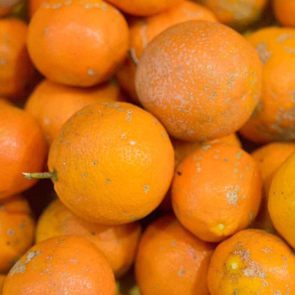 Limão Cravo - 500g