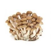 Cogumelo Shimeji bandeja 200 gramas