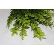 Complemento Verde (CY050184)