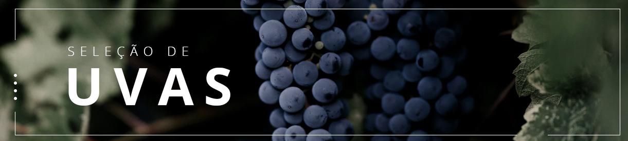 seleção de uvas