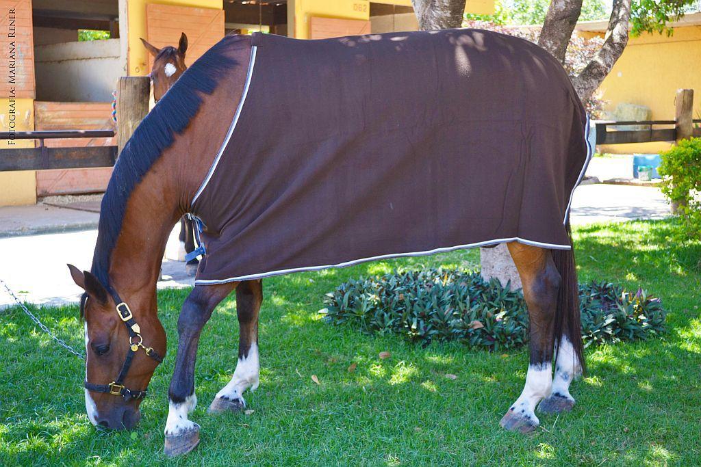 Capa de Frio Cavallus