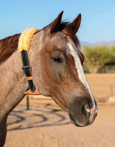 Coleira Aerofagia para cavalos