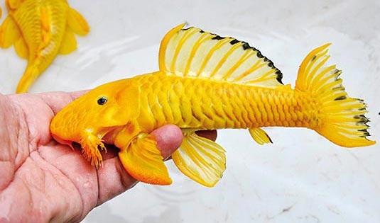 Cascudo Borracha Amarelo 10 cm