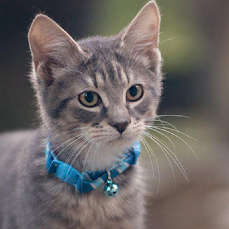 Coleira Regulável com Guizo para Gatos e Cães de Pequeno Porte  - Thata Esportes