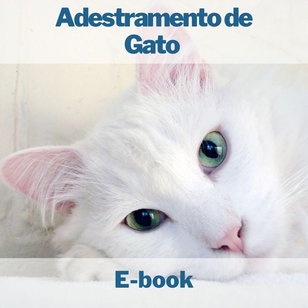 E-book Adestramento de Gato