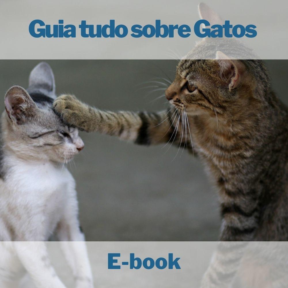 E-book Guia tudo sobre Gatos