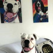 Quadro Canvas tema COMIDAS