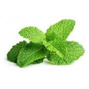 Liquido para cigarro eletronico LiQua - Mint (menta)