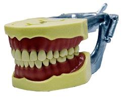 MANEQUIM MOM DENTÍSTICA  C/ENC. INDIVIDUAL  - Dental Curitibana