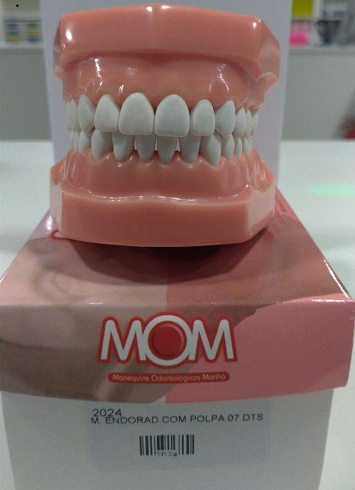 MANEQUIM MOM ENDO RADIOGRAFICO COM POLPA 7 DENTES   - Dental Curitibana