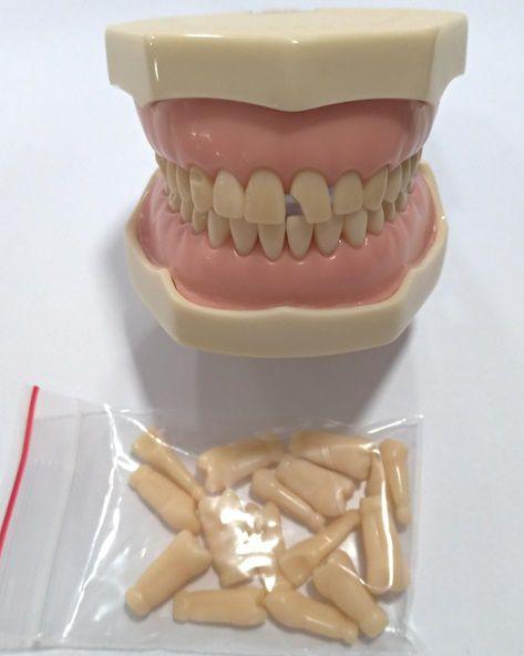 MANEQUIM MOM MATERIÁIS DENTÁRIOS MODELO 8099   - Dental Curitibana