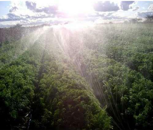 Mangueira perfurada irrigação com 100 metros - Santeno I