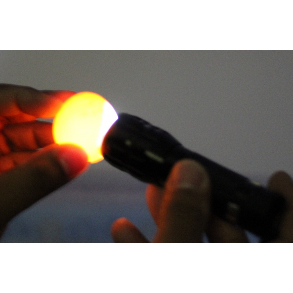 Lanterna Ovoscopica