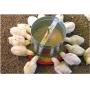Comedouro Aves Galvanizado 3kg P/ Ração