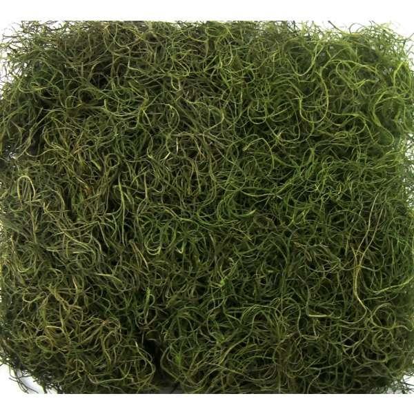 Musgo Barba de Velho Verde 10 Gramas