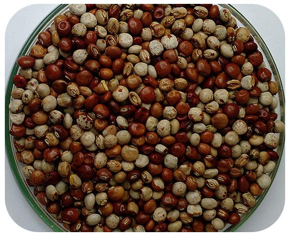 Sementes Feijão Guandu - Caixa com 3,0 kg