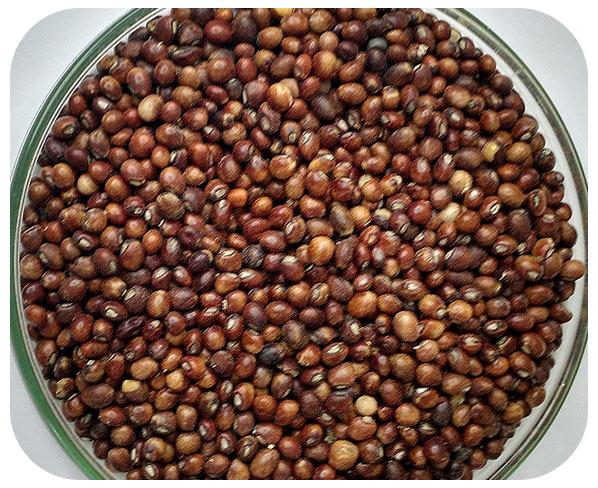 Sementes Feijão Guandu Anão - Caixa com 3,0 kg