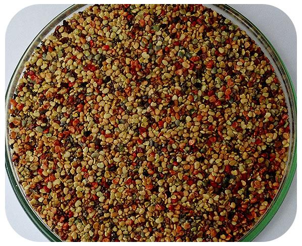 Sementes Crotalária Ochroleuca - Caixa com 3 kg