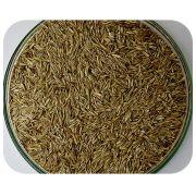 Sementes Azevém Anual - Caixa com 1,0 kg - (72%VC)
