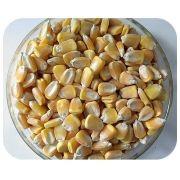 Sementes de Milho - Cativerde 02 (Ideal para Milho Verde) - Caixa com 2,0 kg