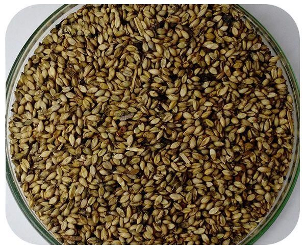 Sementes Brachiaria brizantha - Saco 20 kg - (50% VC)