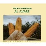 Sementes de Milho - AL Avaré - Caixa com 2 kg