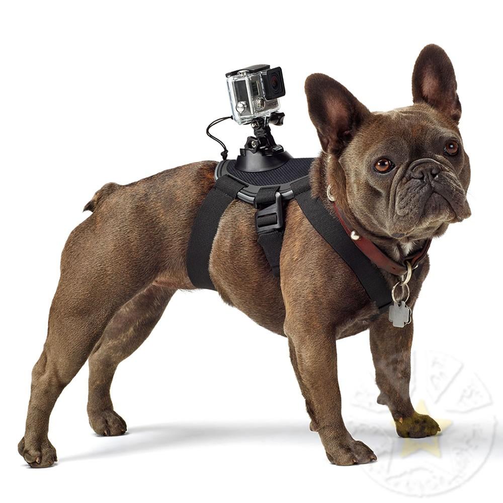 Fetch GoPro  - Motosports