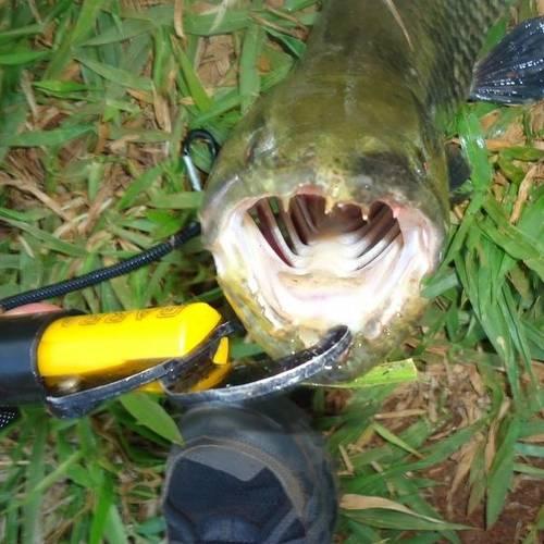 Alicate De Pesca Pega Peixe Garra Pesca Brasil Com Balança 21kg   - Casafaz