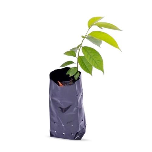 Saco Saquinho Plástico Para Mudas 15 X 25 4000 Unidades  - Casafaz