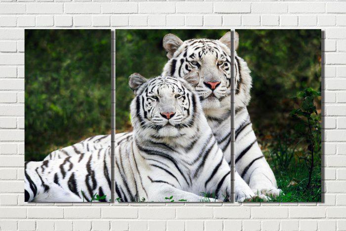 quadro  tigre branco casal  para decoração  3 peças