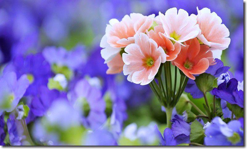 quadro decorativos flores roxas para sala 1 peça