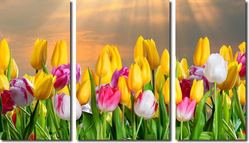 Quadro Decorativo Flores Tulipa Coloridas 3 peças