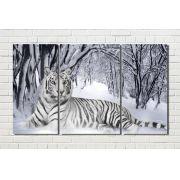 Quadro  tigre branco na neve 3 peças