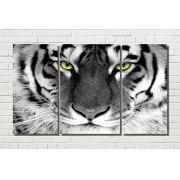 Quadro  Tigre Branco Olhar 3 peças