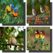 Quadro Decorativo Kit 4 Peças Pássaros
